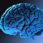 10 продуктов для мозга