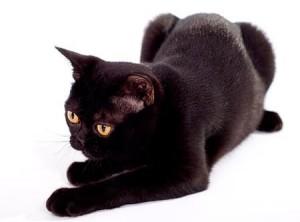 Знает точно черный кот, Единица где живет