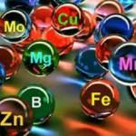 Минеральные вещества в организме человека