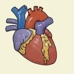 Сбережём сердце