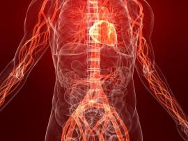 Как восстанавливается организм только что бросившего курить