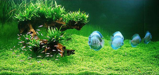 Стили оформления аквариумов