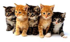 Правила выбора корма для кошки
