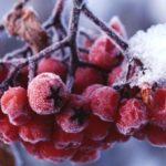 Зимнее питание: что необходимо и полезно в холодное время года