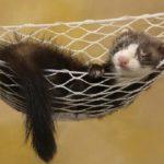 Игры про животных: досуг и обучение