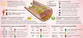 Нормы холестерина для мужчин и женщин по возрасту