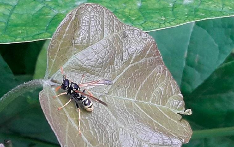 Что поможет от укусов насекомых
