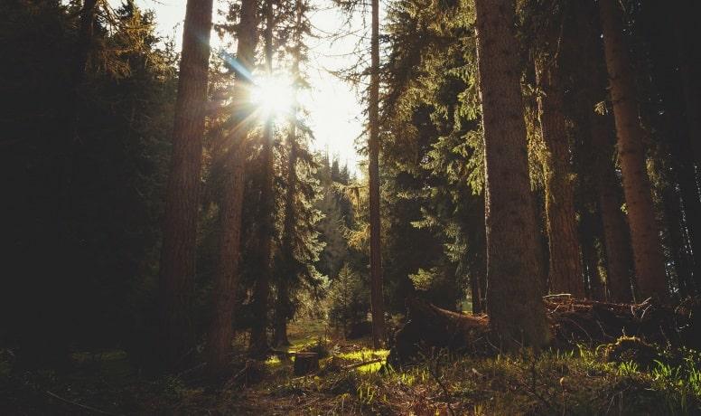 Вот в другой раз поехала бабка по дрова. В болоте хряснуло, в лесу стукнуло - медведь идет.