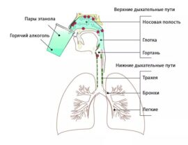 Наглядная иллюстрация дезинфекции парами этанола по методу, предложенному Шинтаке