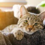 8 способов, как отучить кошку царапать мебель дома