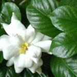 Комнатные растения: как выбрать домашний цветок